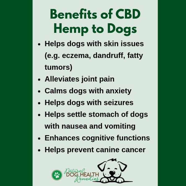Benefits of CBD Hemp to Dogs