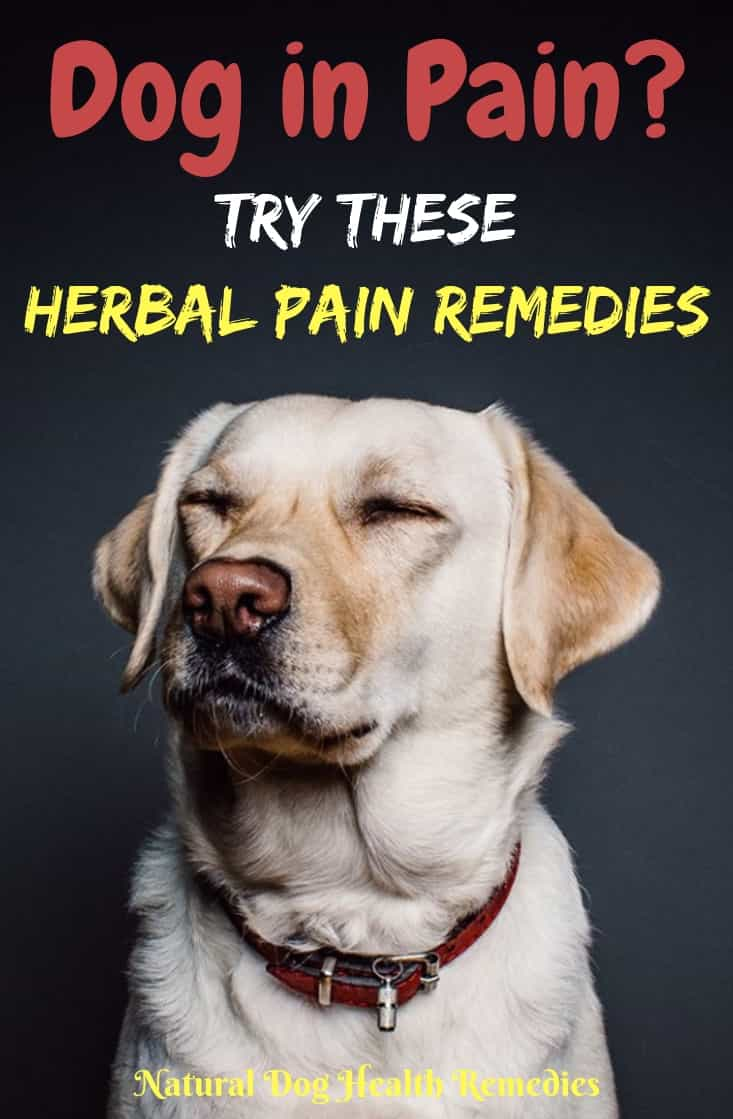 Natural Herbal Pain Relief for Dogs