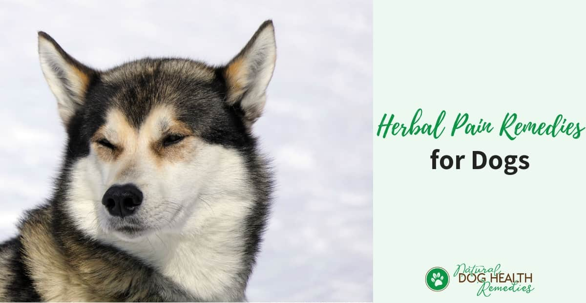 Herbal Pain Remedies for Dogs | Natural Dog Pain Relief