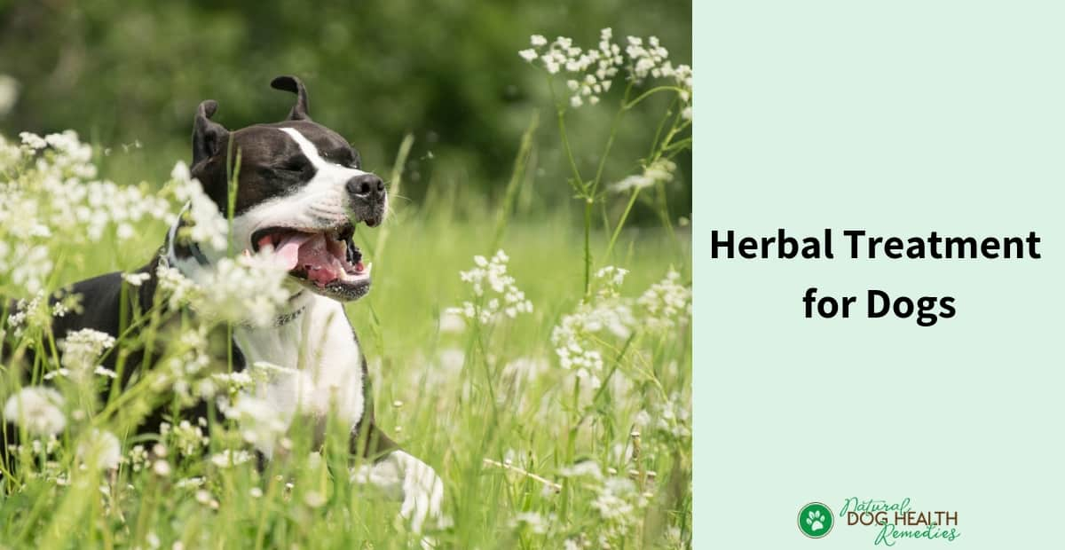 Herbal Treatment for Dogs