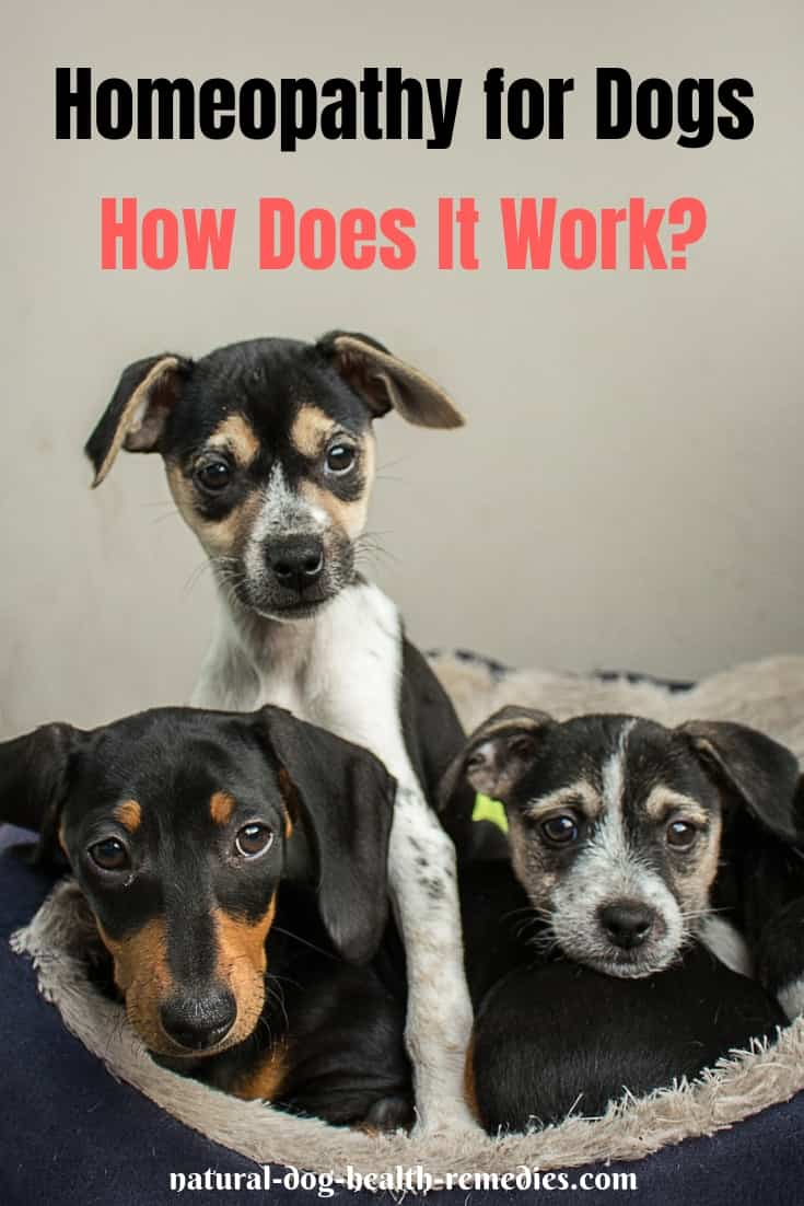Homeopathy for Dogs | A Dog Owners' Guide