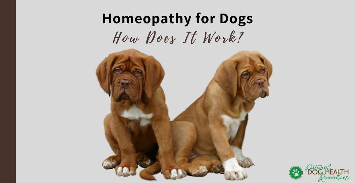 Homeopathy for Dogs