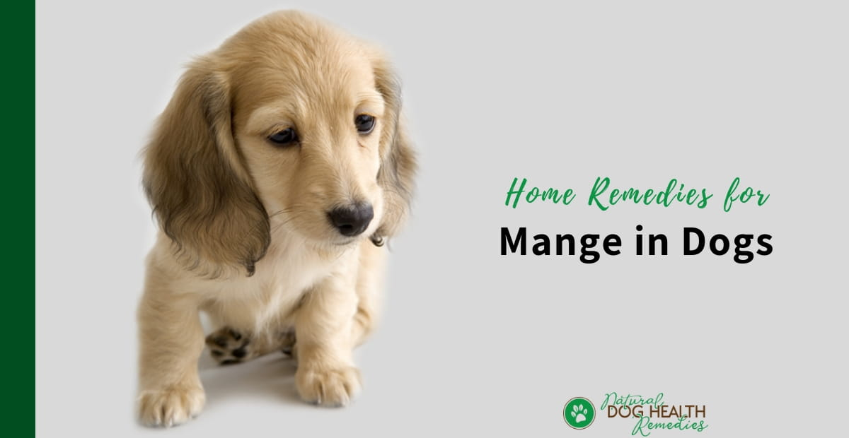 Home Remedies for Mange in Dogs