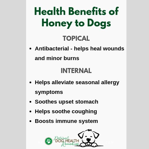Honey Benefits to Dogs