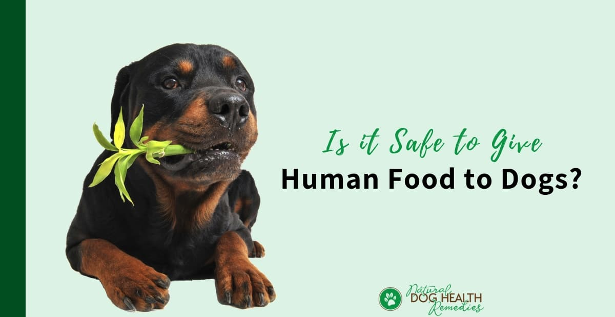 Human Food for Dogs
