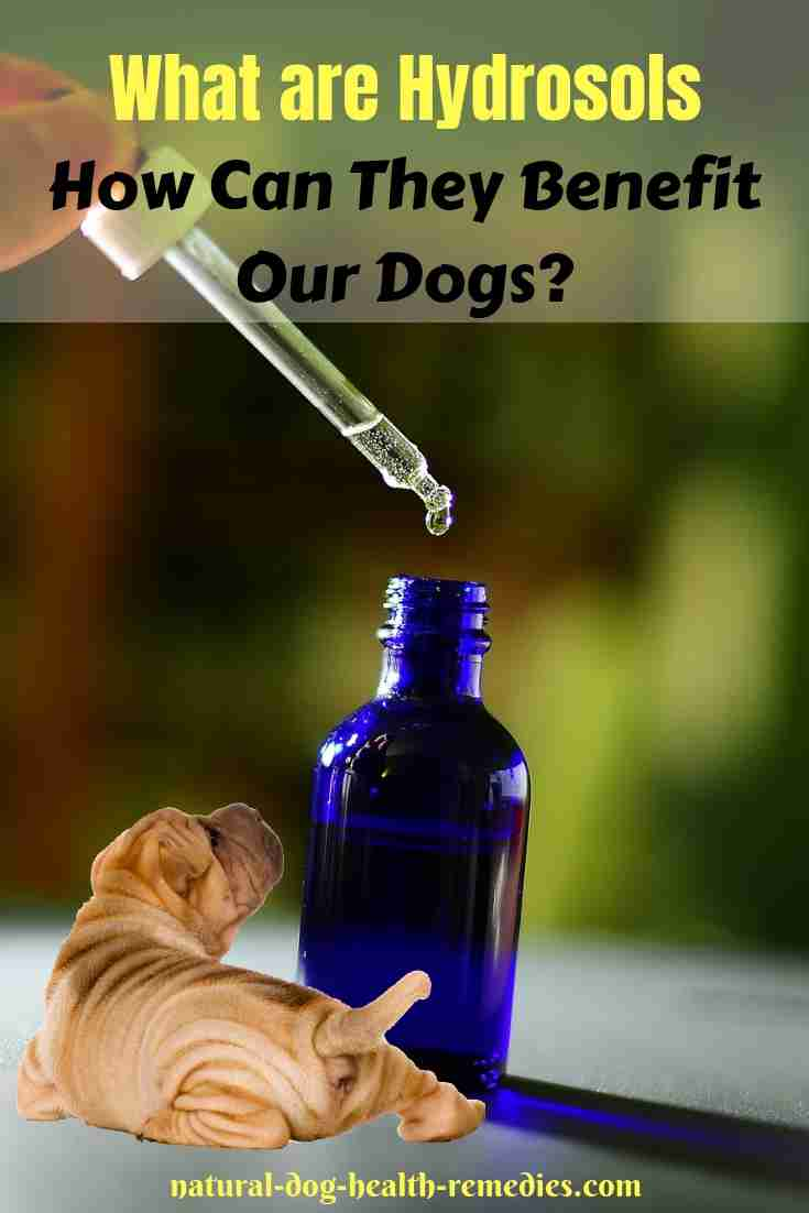 Benefits of Hydrosols for Dogs