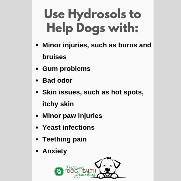 Hydrosol Uses for Dogs