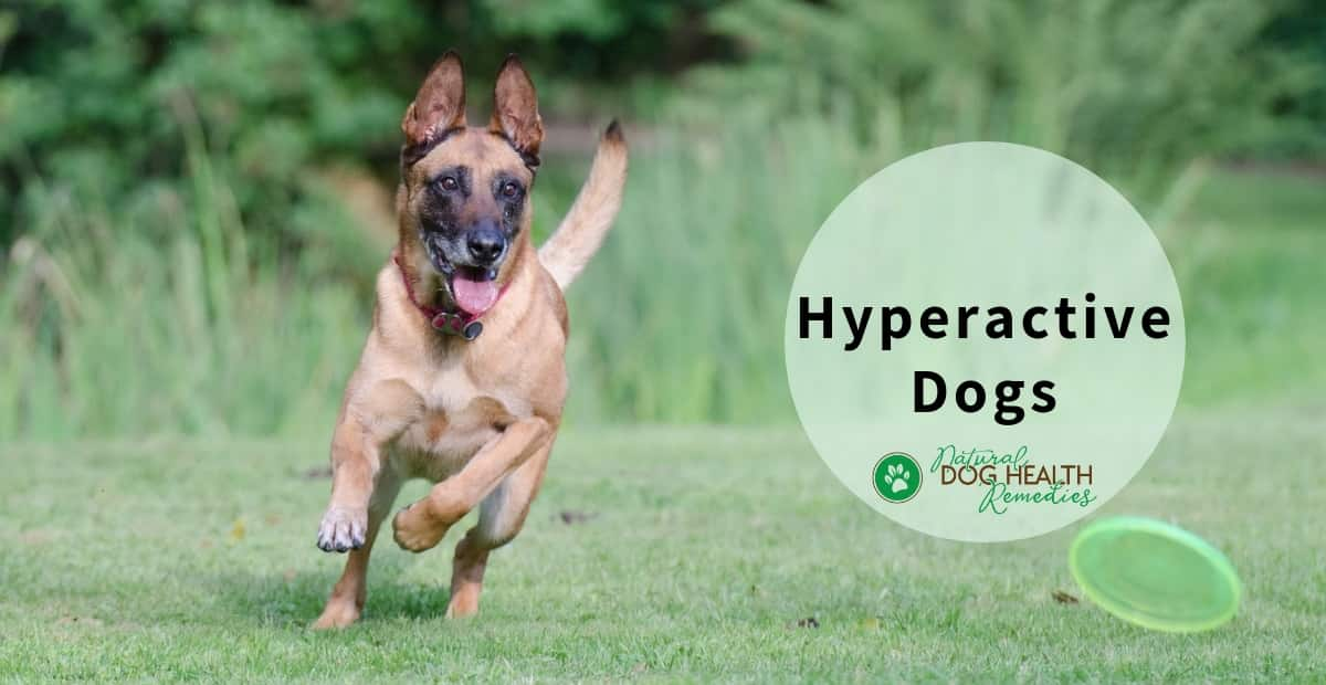 Hyperactive Dogs