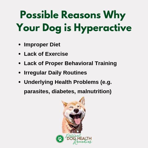 Dog Hyperactivity Causes