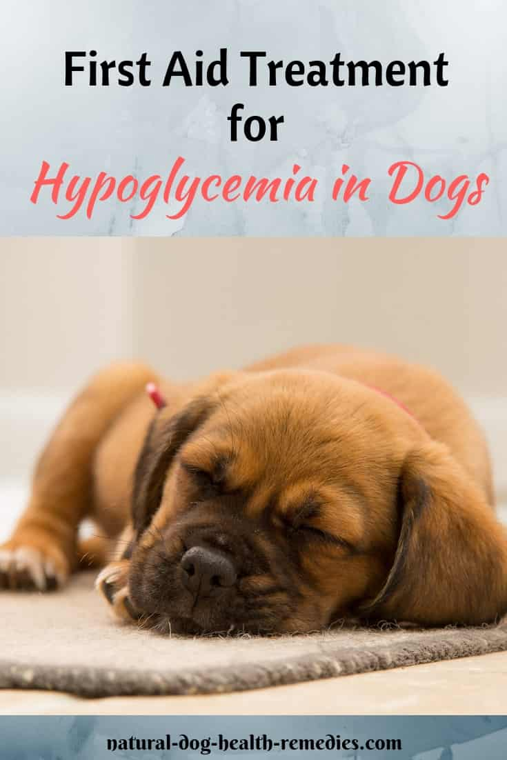 First Aid for Hypoglycemia in Dogs