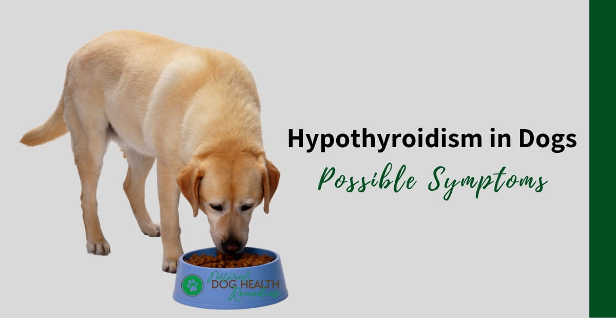 Symptoms Of Hypothyroidism In Dogs Warning Signs Red Flags