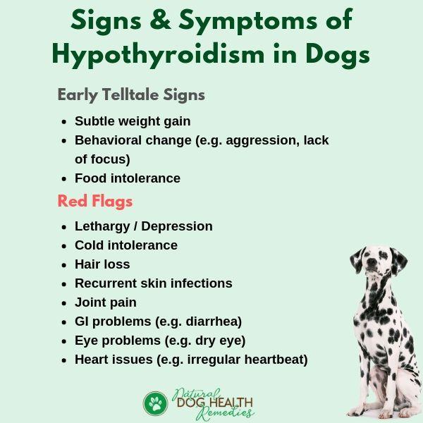 Dog Hypothyroidism Symptoms
