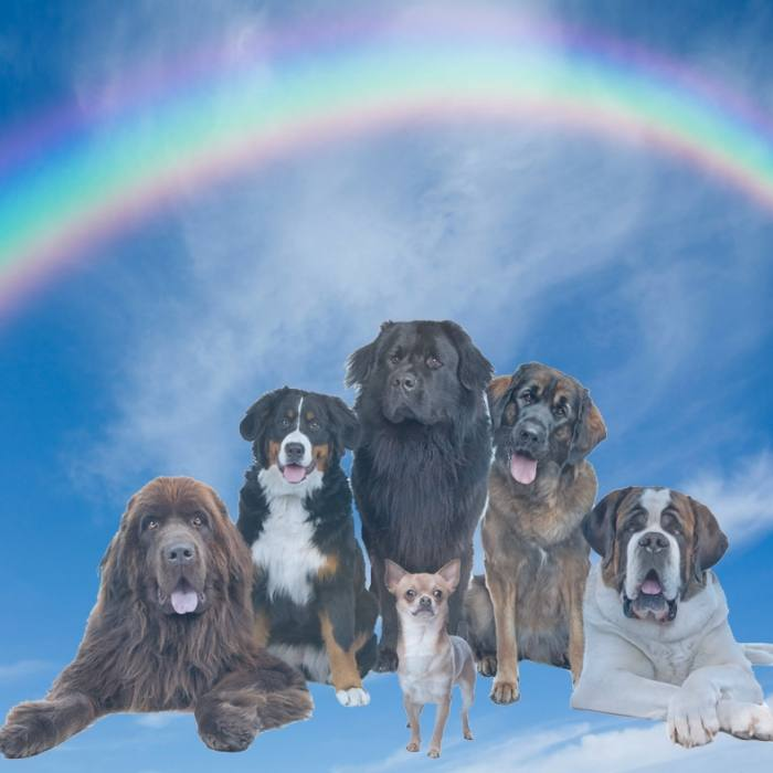 Pawsome Fur Angels Pet Loss Support