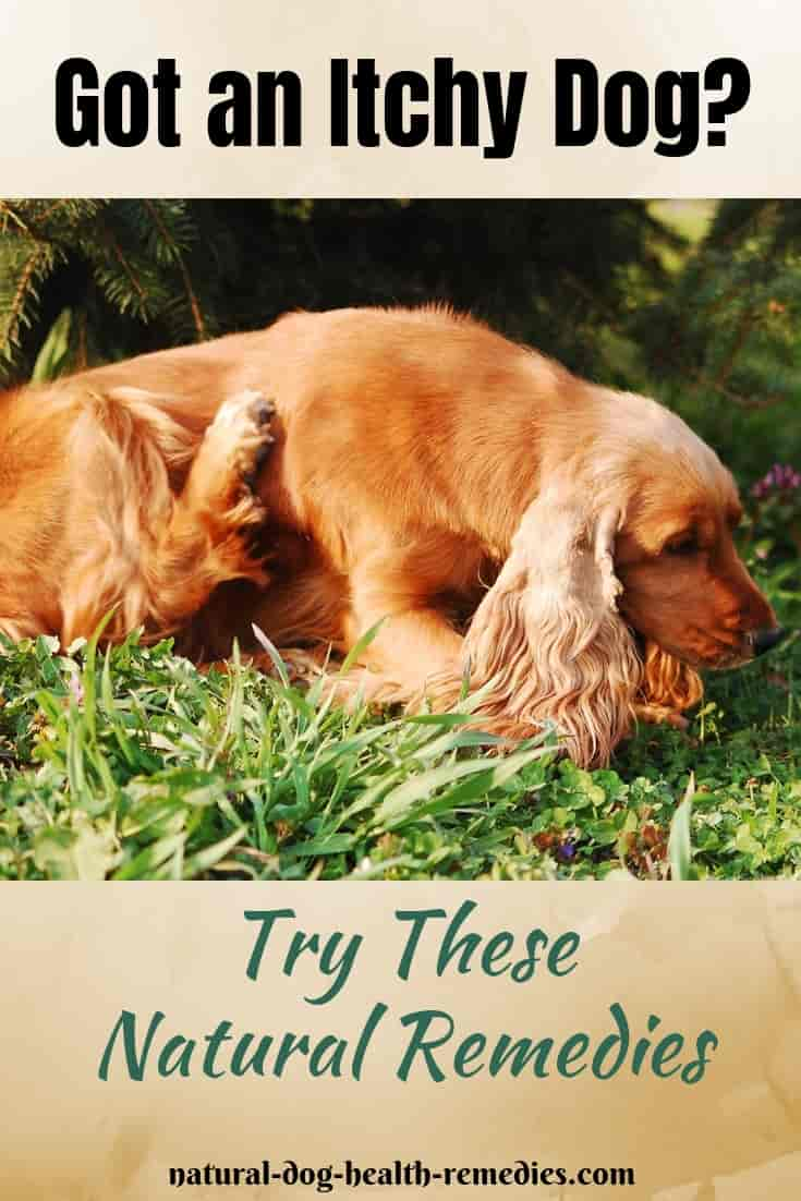 Natural Itch Relief for Dogs
