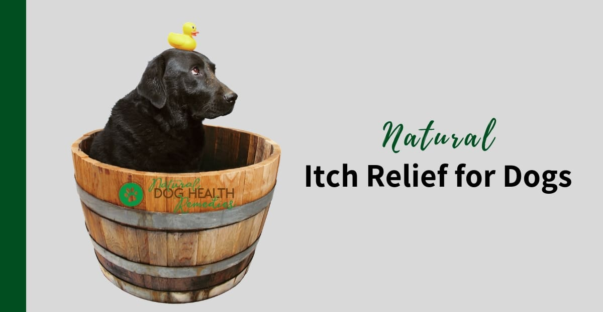 Itch Relief for Dogs
