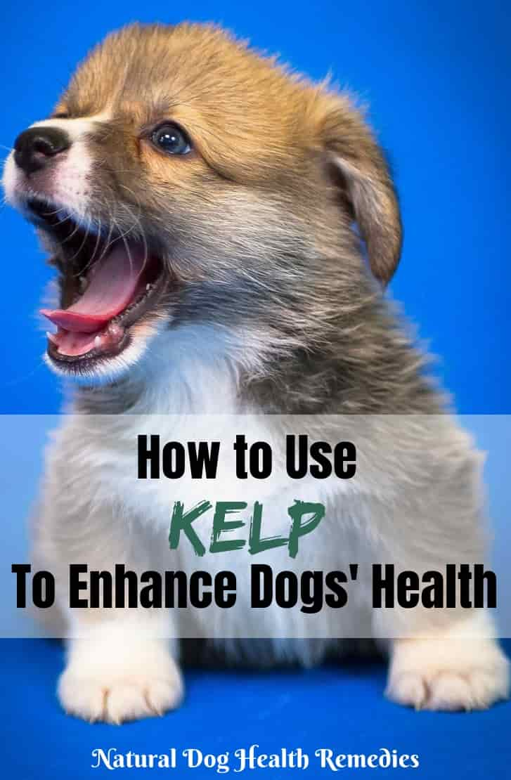 Benefits of Kelp for Dogs