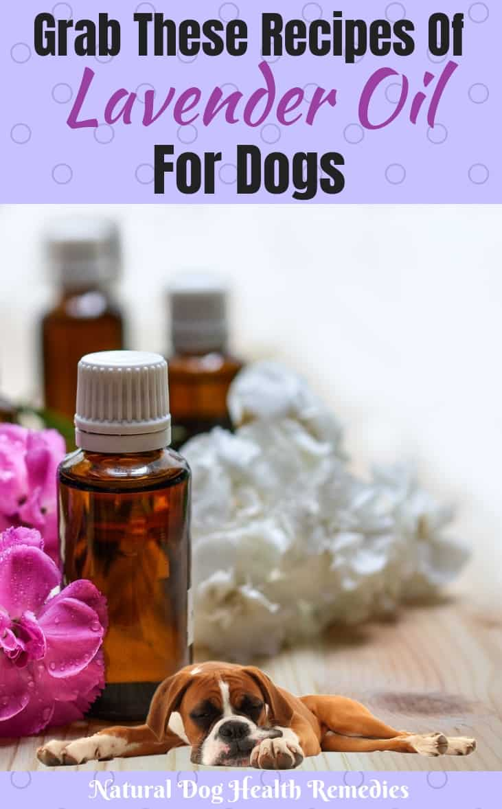 Lavender Oil Benefits to Dogs