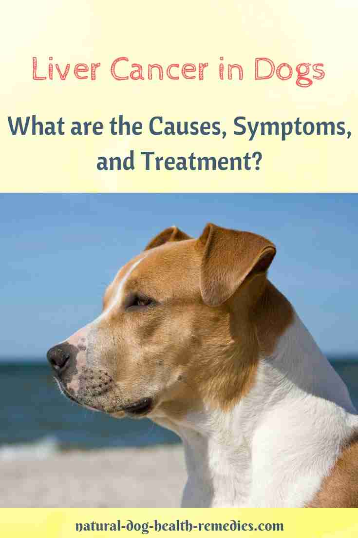 Treatment and Prevention of Liver Cancer in Dogs