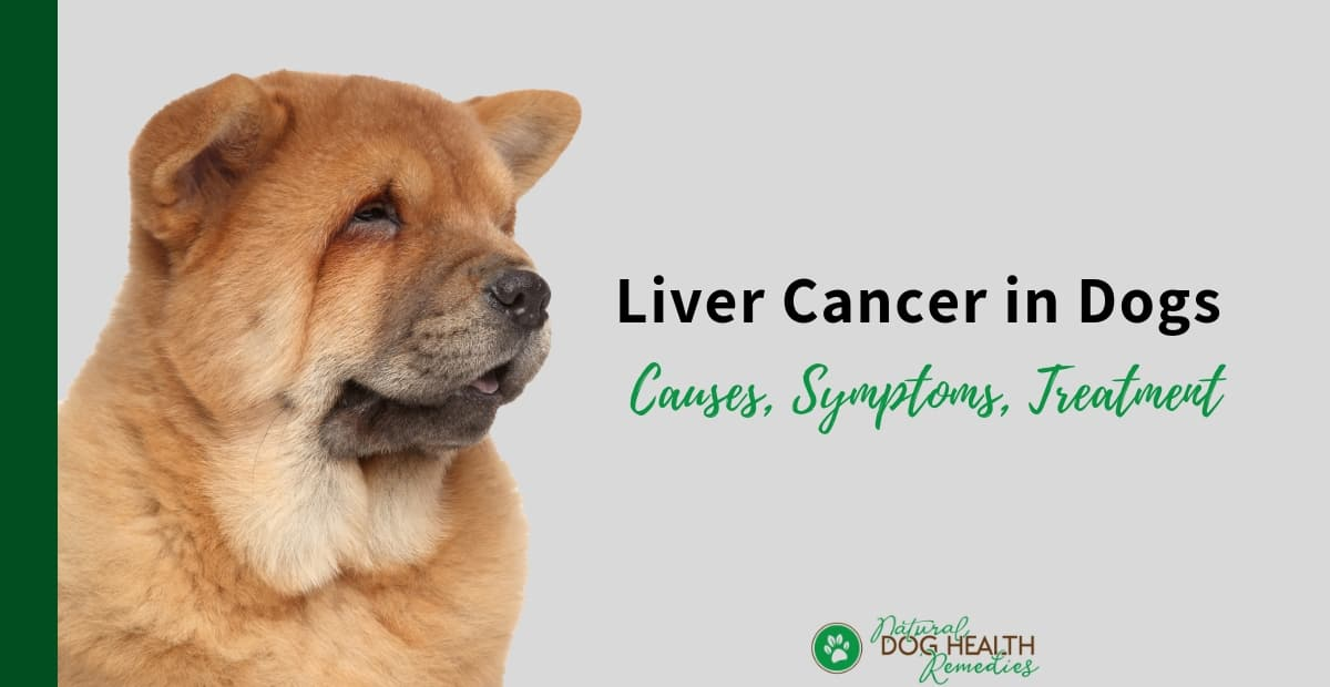 Liver Cancer in Dogs
