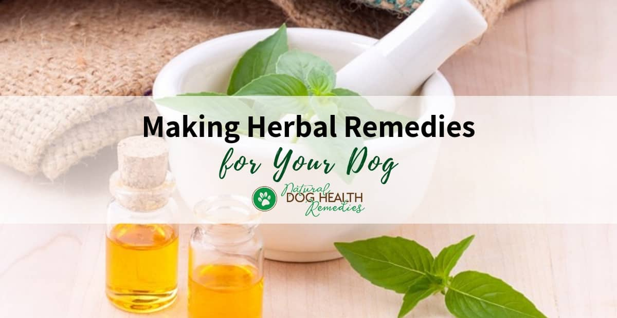 Making Herbal Remedies for Dogs