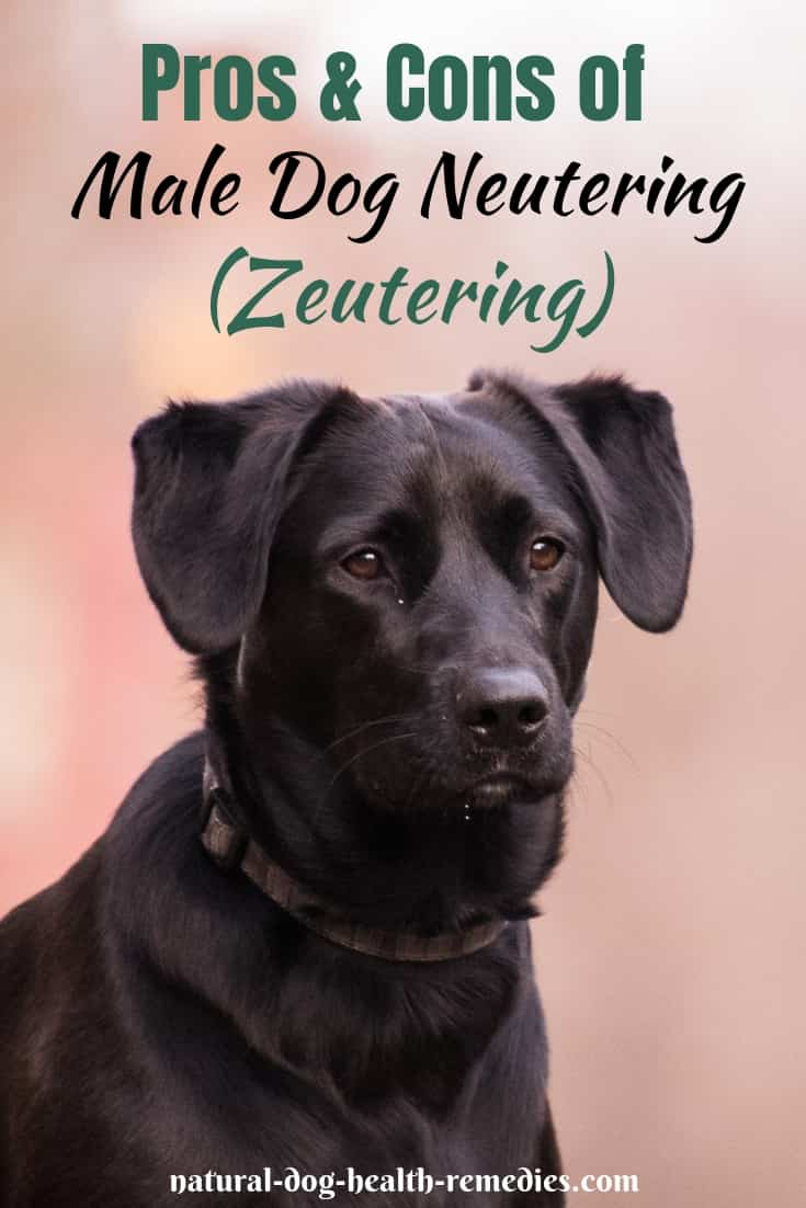 Zeutering - Male Dog Neutering