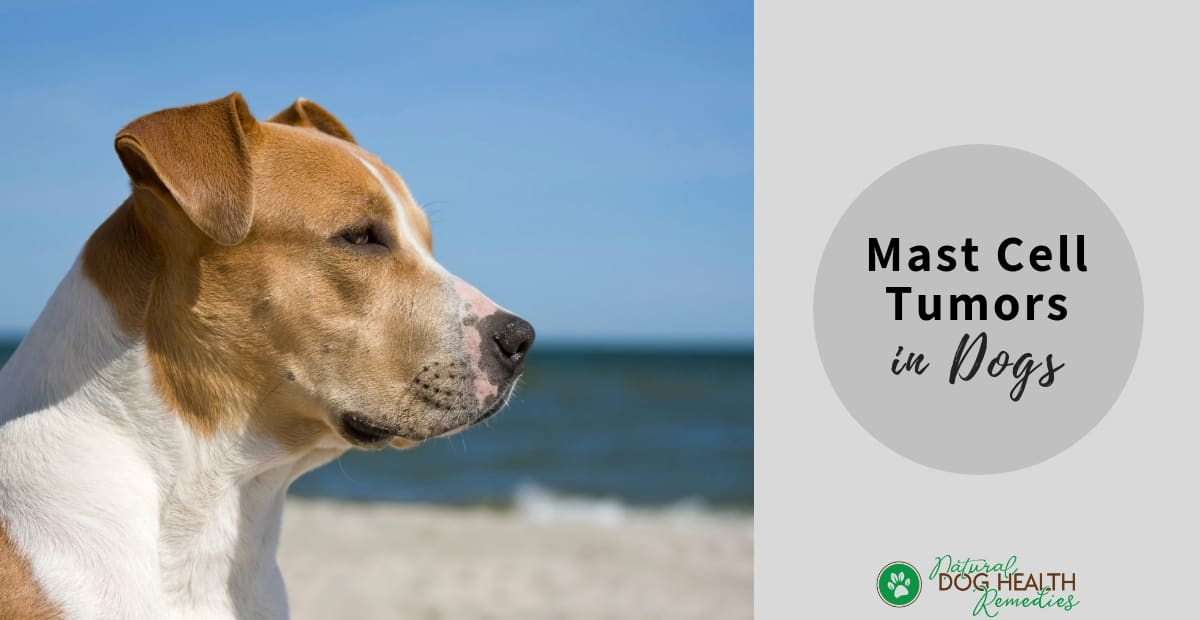 Mast Cell Tumors in Dogs | Symptoms & Treatment