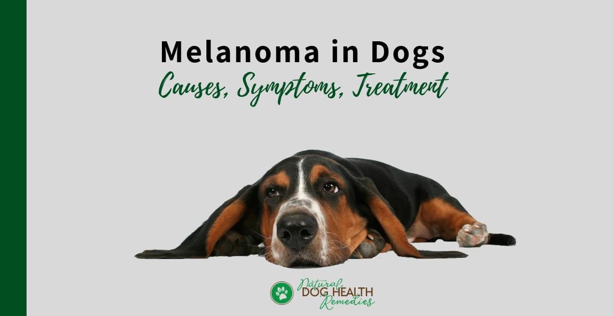 Melanoma in Dogs