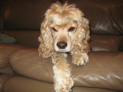 Dog Cloudy Eye Overnight