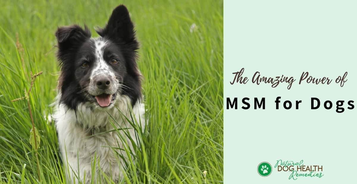 MSM for Dogs