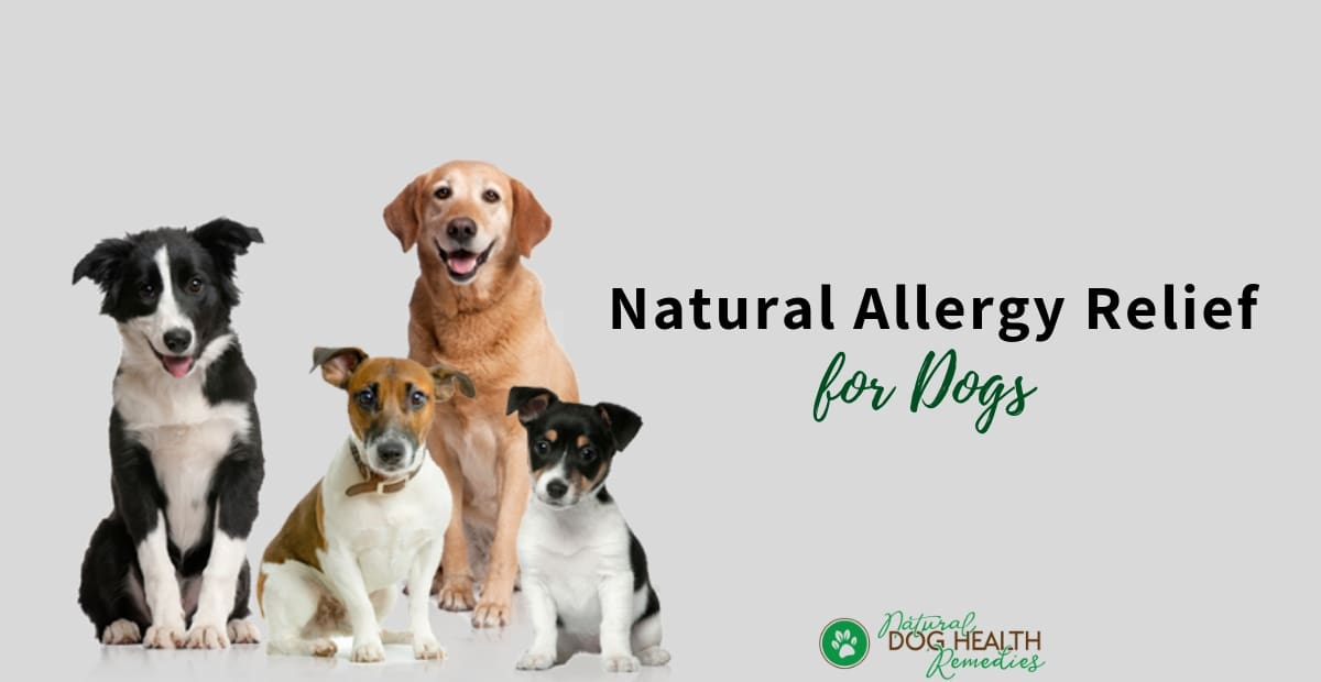 Natural Allergy Relief for Dogs