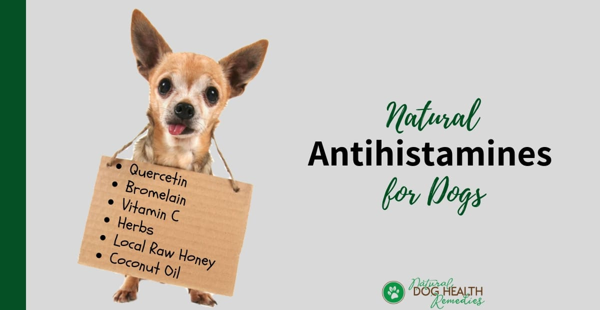 Natural Antihistamines for Dogs