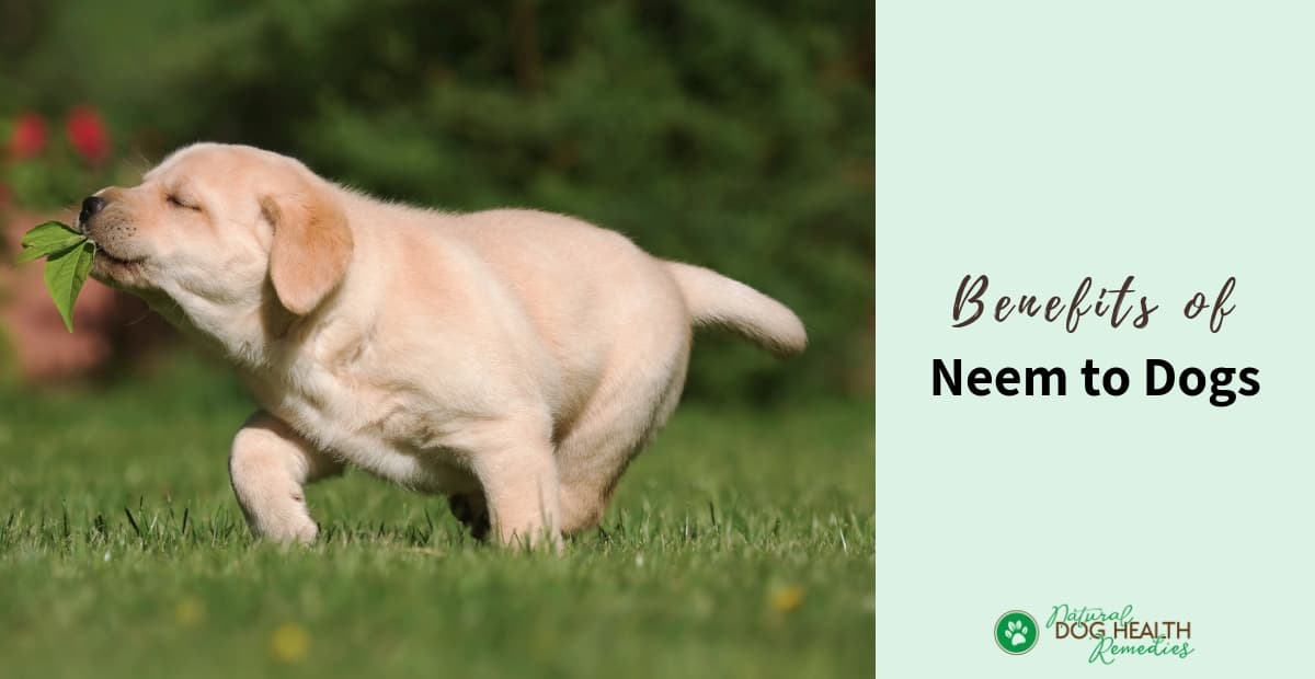 Neem for Dogs | Neem Oil Benefits to Dogs
