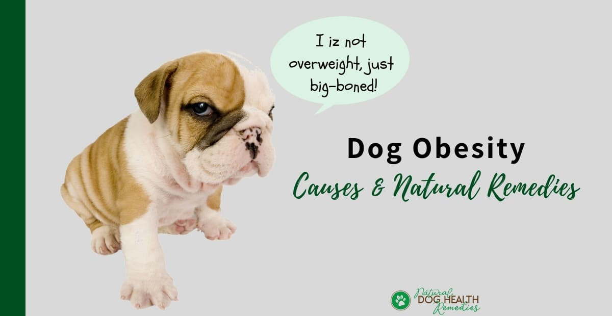 Obese Dogs Causes Weight Loss For Dogs