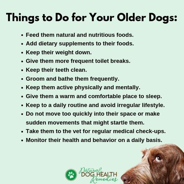 Old Dog Care