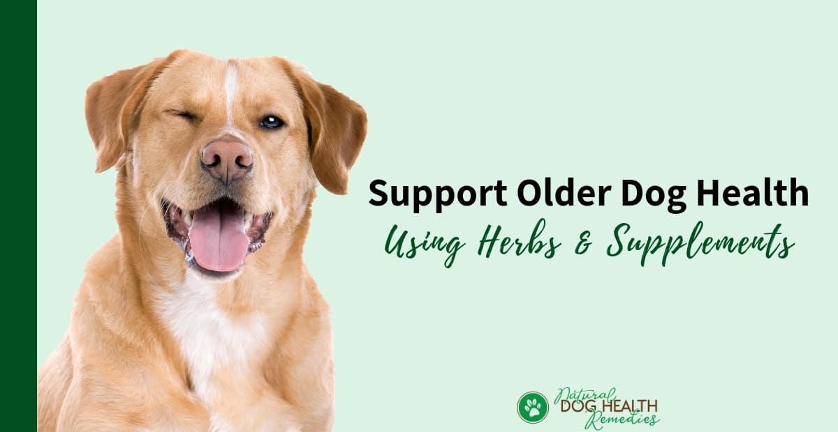 Herbal Supplements for Older Dog Health