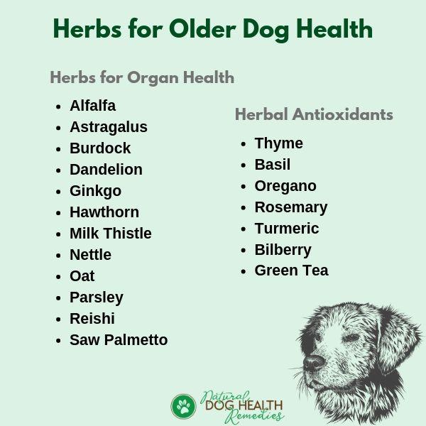 Herbs for Older Dog Health