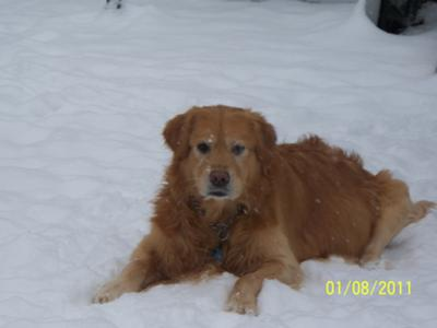 Paddy loves the snow