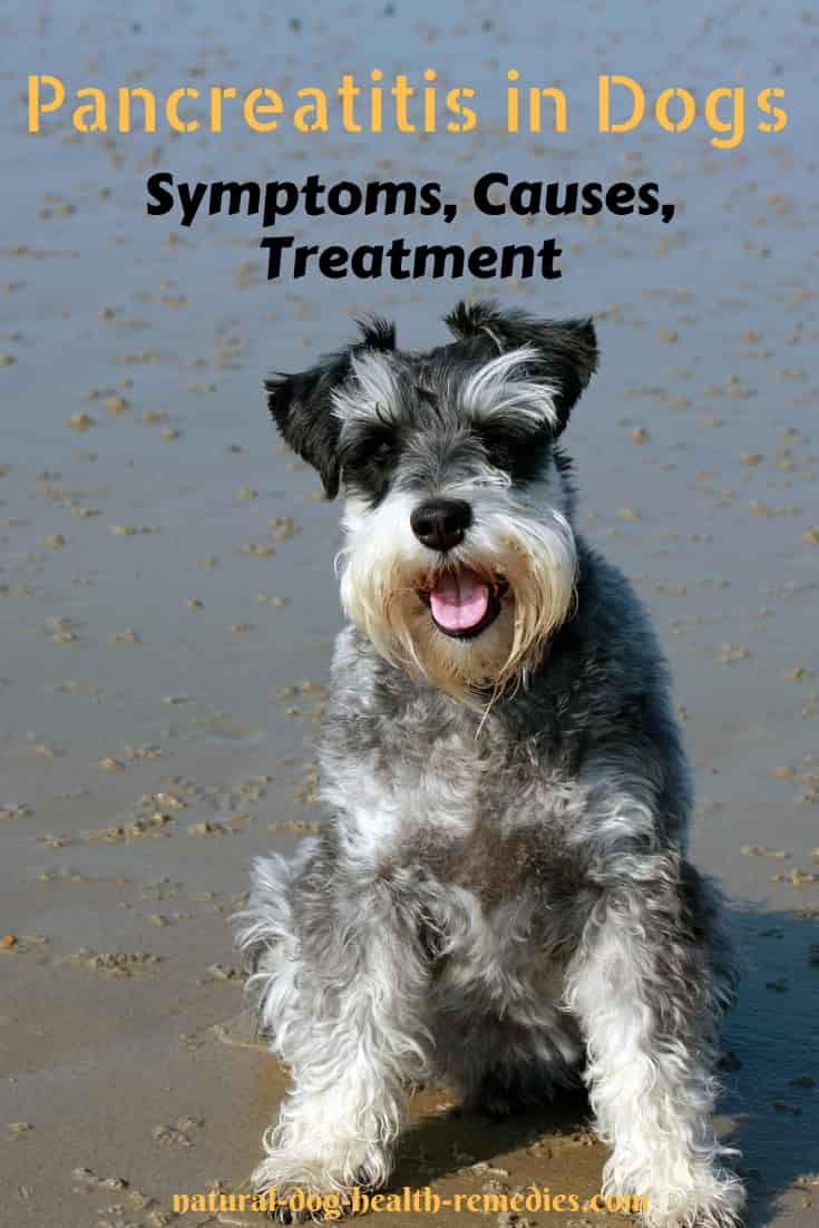 Symptoms and Treatment of Pancreatitis in Dogs