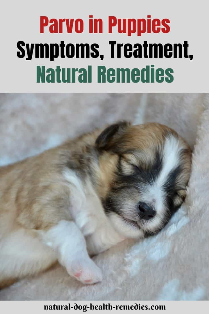 Parvo Symptoms & Treatment