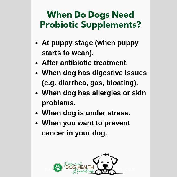 Benefits of Probiotics to Dogs