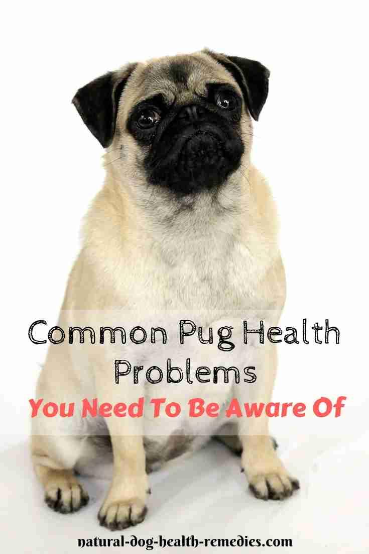 Pug Health Problems
