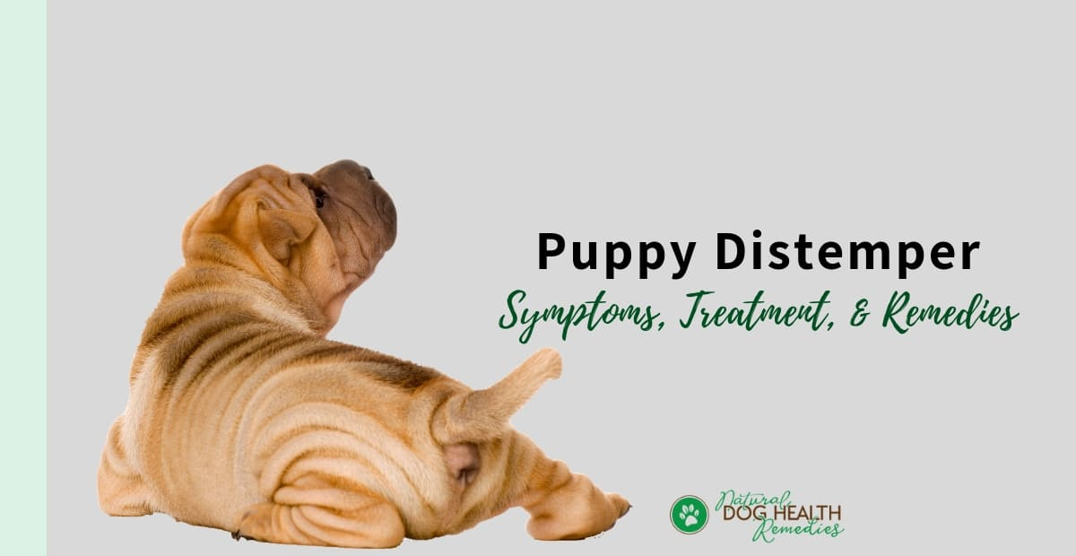 Puppy Distemper