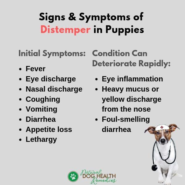 Puppy Distemper Symptoms