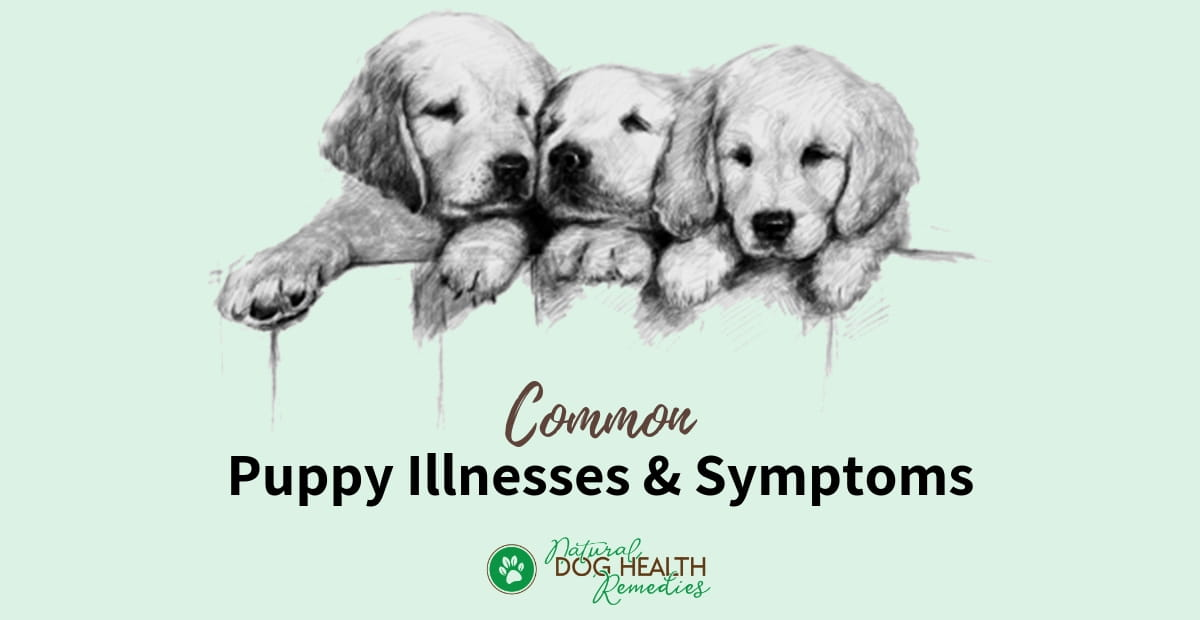 Common Puppy Health Issues