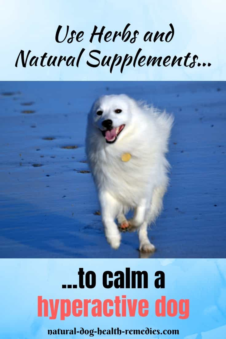 Remedies for Hyperactive Dogs