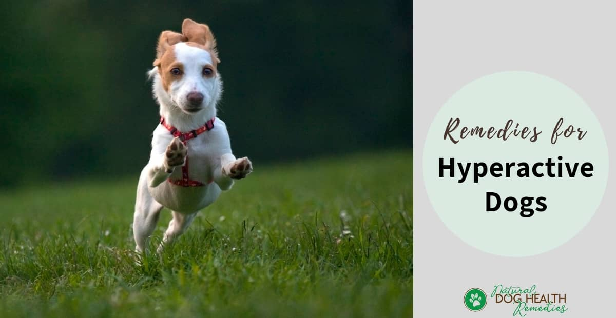 Remedies for Hyper Dogs