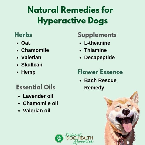 Natural Remedies for Hyperactive Dogs