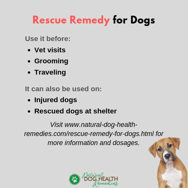 Rescue Remedy for Dogs Uses