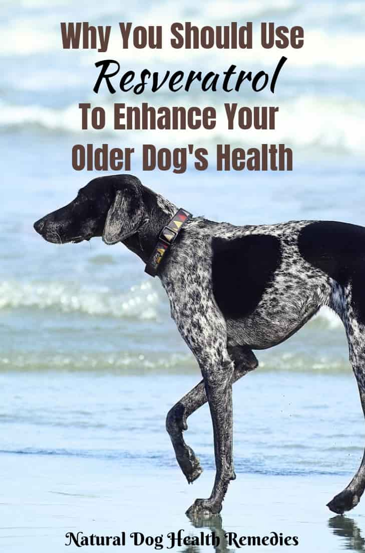 Resveratrol Benefits to Dogs