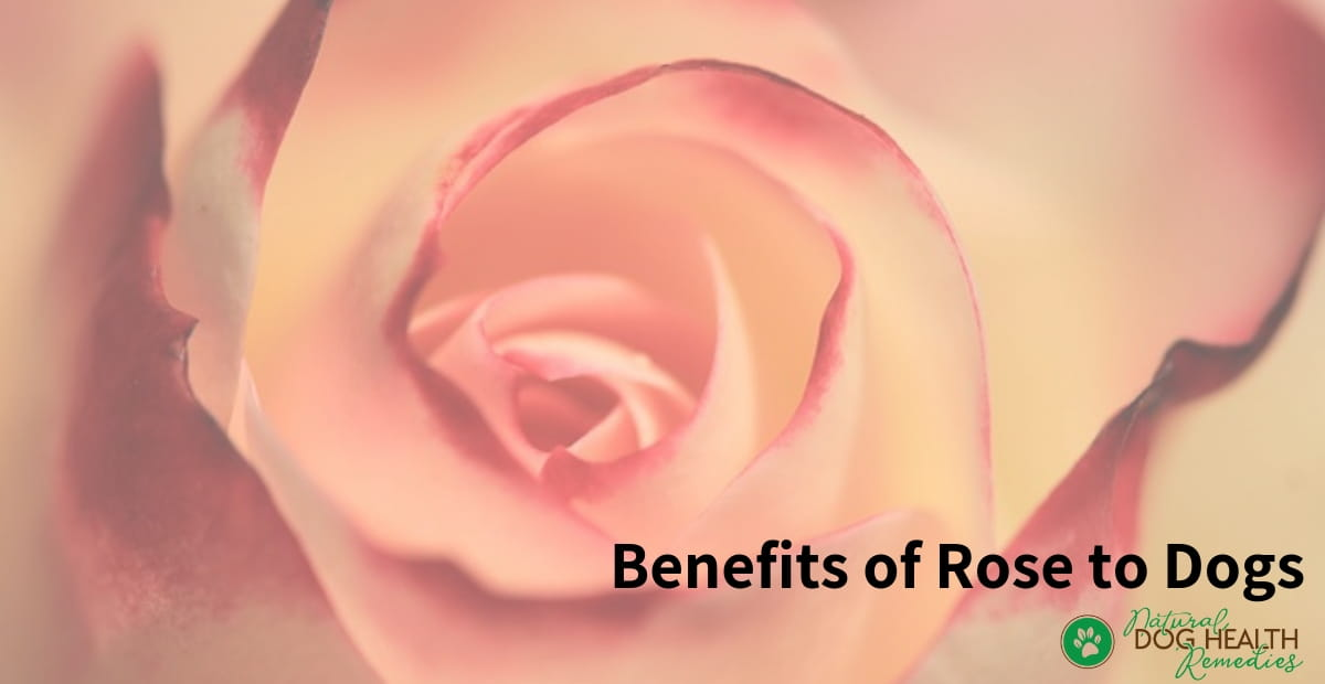 Rose Benefits to Dogs